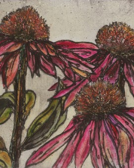 late summer echinacea 17