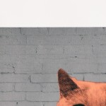 Anne-Storno_Everybody-wants-to-be-a-cat-2 copy 2