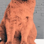Anne-Storno_Everybody-wants-to-be-a-cat-2 copy 5