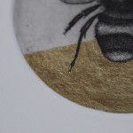 Guy Allen, Bee Study, Limited Edition Print 4