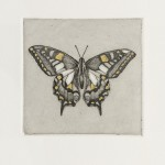 Guy Allen_Butterfly Study_Etching, aquatint and gold leaf_8x8cm