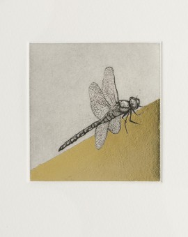 Guy Allen_Dragonfly Study_Etching and gold leaf_8x8cm