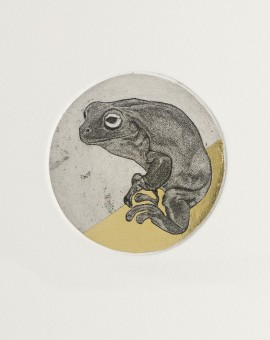 Guy Allen_Frog Study_Etching, aquatint and gold leaf_8x8cm
