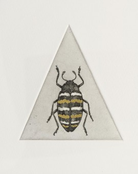Guy Allen_Golden Beetle Study_Etching and gold leaf_8x8cm