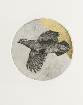 Guy Allen_Partridge Study_Etching and gold leaf_8x8cm