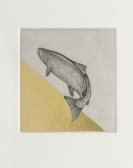 Guy Allen_Salmon Study_Etching, aquatint and gold leaf_8x8cm