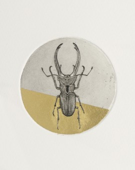 Guy Allen_Stag Beetle Study_Etching and gold leaf_8x8cm