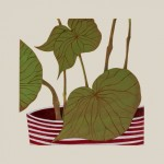 Begonia-Kerry-Day-True-Plant-Art-Wychwood-Art