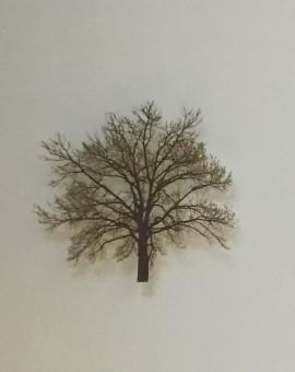 Grey-Sky-Oak-Emma-Levine-Wychwood-Art
