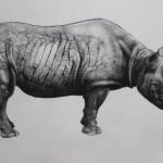 Tammy-Mackay-Golden-Rhino-Wychwood-Art-White-Rhino