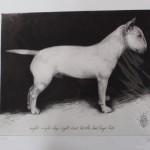 Tammy Mackay, Night Night, Dog Art, Prints of Dogs, Animal Art