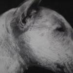 Tammy Mackay, Night Night, Dog Art, Prints of Dogs, Animal Art 7