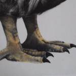 Tammy Mackay, True Colours, Dodo Print, Animal Art, Affordable Art 10