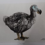 Tammy Mackay, True Colours, Dodo Print, Animal Art, Affordable Art