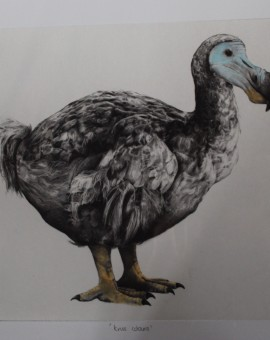Tammy Mackay, True Colours, Dodo Print, Animal Art, Affordable Art