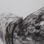 Tammy Mackay, True Colours, Dodo Print, Animal Art, Affordable Art 6