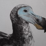 Tammy Mackay, True Colours, Dodo Print, Animal Art, Affordable Art 8