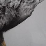 Tammy Mackay, True Colours, Dodo Print, Animal Art, Affordable Art 9