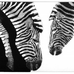 Jane Peart Black and white, white and black etching Wychwood Art