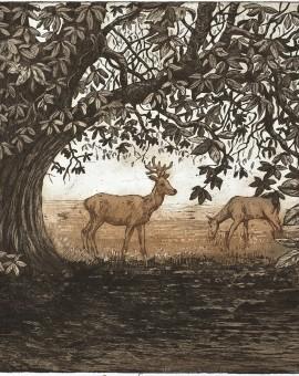 Jane Peart Summer Shadows etching Wychwood Art