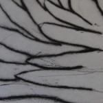 Kate Boxer, Fantail Dove, Drypoint Print, Monochrome Prints 3