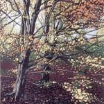 Alexandra Buckle - Autumn Beeches - woodland linocut print