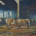 Allbrook Evening cattle with calf. Cattle in a barn