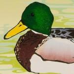 Laura-Boswell-Mallard-Ducks-with-Hazel-Catkins-det2-Wychwood-Art