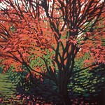 Alexandra Buckle - Autumn Acer - tree woodland