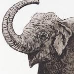 Elephant-Parade copy