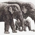 Elephant-Parade copy 2