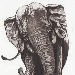 Elephant-Parade copy 3