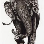 Elephant Stroppy