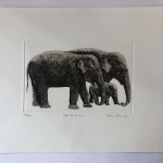 Jane Peart, Family Gathering, Elephant Art, Family Art, Etching 12