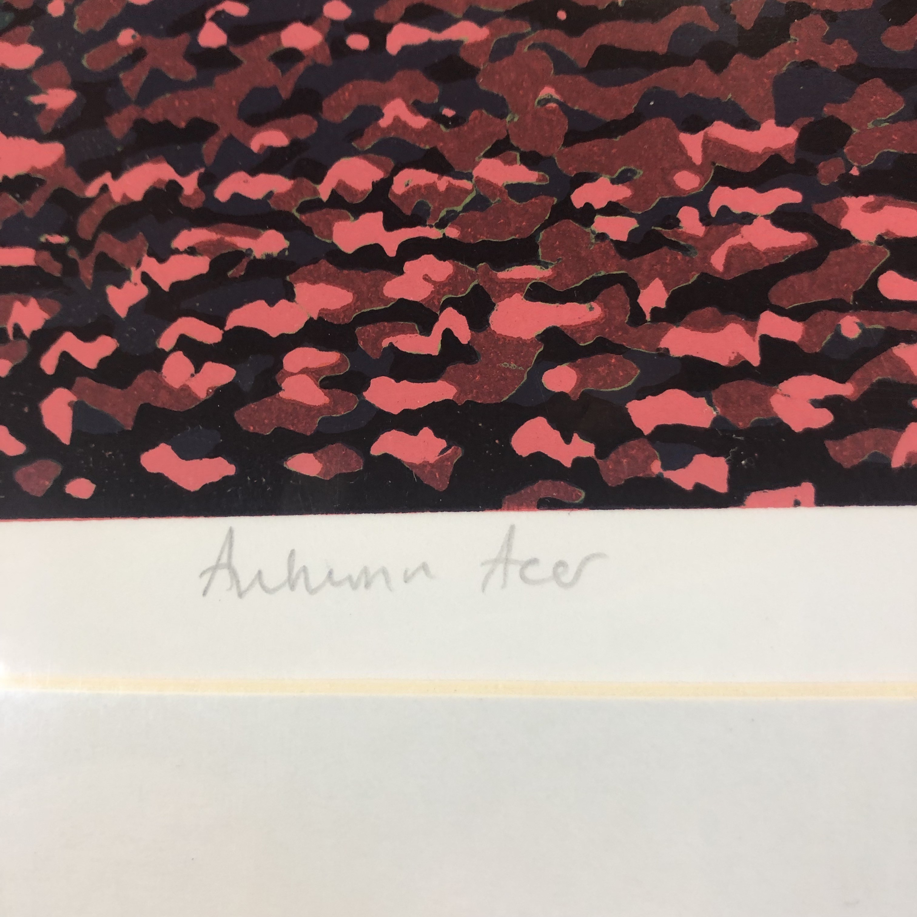 A reduction linocut of an acer tree with beautiful red leaves.