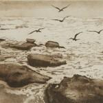 Sea Birds-Tim-Southall