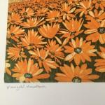 mountain marigolds title