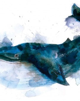 gavin dobsons - Whale - Limited edition print