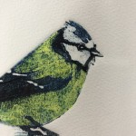 Blue tit - sue browne, limited edition print, animal art, bird art, family art - close up