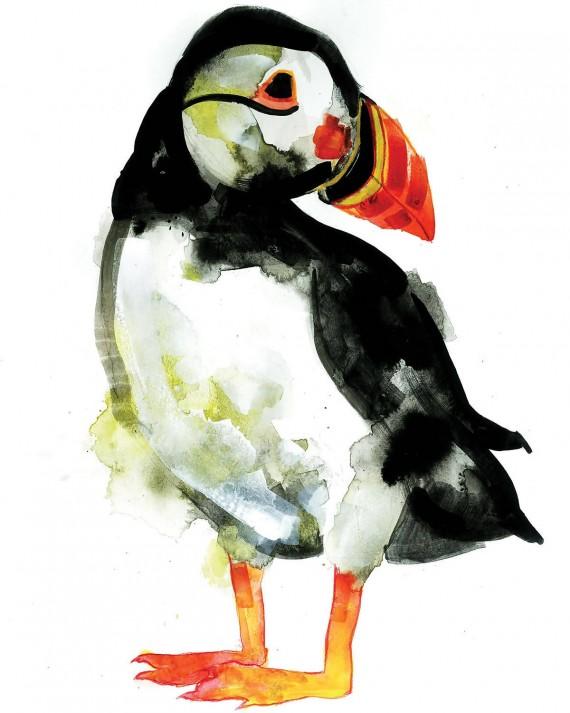 gavin dobson | puffin | bird screen print | animal art | cute art