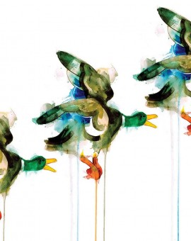 GAvin Dobson | Three flying ducks| ANimal art