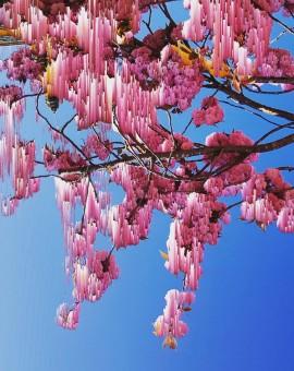 Katie Hallam | Blossom | Photograph