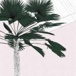a green palms blush