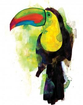 toucan1sml