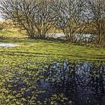 Alexandra Buckle -Lakeside Puddles -water reflections lake linocut print