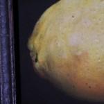 Dani Humberstone, Lemon, Original Oil Painting for Sale 2