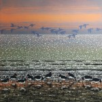 Oyster Catchers with Geese