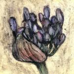 Vicky Oldfield. Agapanthus  burst. Wychwood Art
