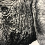 tammy-mackay-untitled-elephant-photopolymer-print-signature-detail-7-close-up