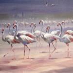 trevor_waugh_flamingoes